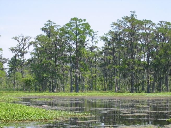 Marshland near Intracoastal Canal