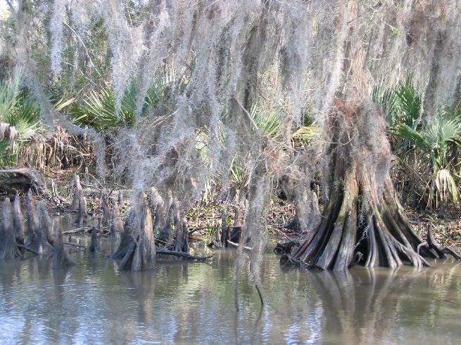 Swamp in Dularge